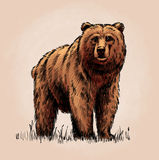 Color engrave isolated grizzly bear Royalty Free Stock Photo