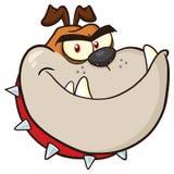 Color enojado de Brown del carácter de la mascota de la historieta de la cabeza de perro del dogo Fotografía de archivo libre de regalías