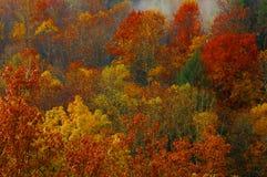 Color espectacular 2006 de las colinas de Hocking imágenes de archivo libres de regalías