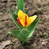Color? et vernal Fleurs image stock