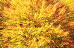 color explosion Royalty Free Stock Image