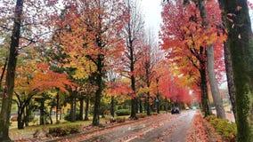 Color of fall Stock Photos