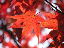 Color of fall Stock Photography