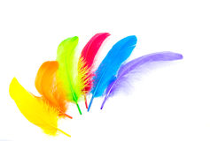 Color feather Stock Photography