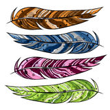 Color feather of a bird. Vector illustration Royalty Free Stock Photos