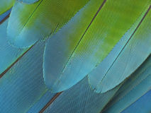Color feather close-up Royalty Free Stock Images