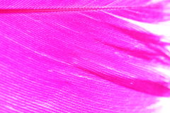 Color Feather, macro detail of each thin line Stock Image