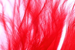 Color Feather, macro detail of each thin line Royalty Free Stock Photo