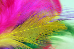 Color feathers Stock Photos
