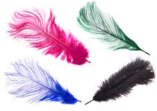 Color feathers stock image