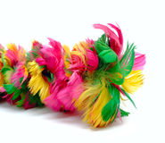Color feathers isolated on white Stock Photos