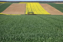 Color&fields Стоковая Фотография