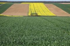 Color&fields fotografia stock