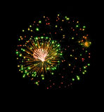 Color firework explosion in black sky Stock Image