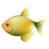 Color fish icon image. Color litmus fish icon,  illustraction design Stock Photos