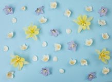 Color flat lay with delphinium, aquilegia and jasmine Royalty Free Stock Photos