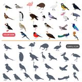 Color flat and simple birds icons set. Color flat and simple birds icons for wen and mobile design Stock Photography