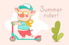 Color flat style design of urban character rider pig for web, si royalty free illustration