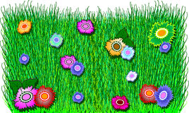 Color flower on green grass. Stock Photography