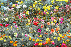 color of flower. Royalty Free Stock Images