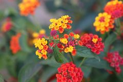 Color, Flower, Yellow, Nature Stock Photos