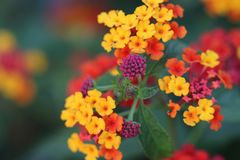 Color, Flower, Yellow, Nature Stock Image