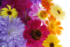Color flowers Stock Images