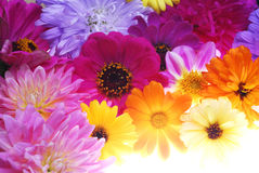 Color flowers Stock Image
