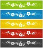 Color flowers background Stock Images