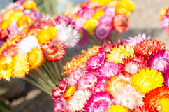 Color of flowers. Stock Images