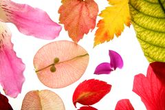 Color flowers, leaves, petals, isolated Royalty Free Stock Photo