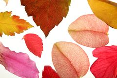 Color flowers, leaves, petals, isolated white back. Ground, spring autumn, seasons. Bright colors stock images
