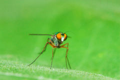 Color fly on green leaf Stock Image