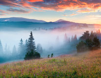 Color foggy sunrise on a meadow Royalty Free Stock Images