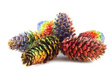 Color forest cones Stock Photography