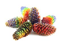 Color forest cones Stock Image