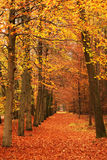 Color forest Stock Image