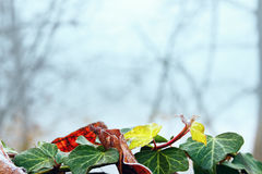 Color frosty leaves on a blurred background. Stock Photography