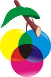 Color fruit. As a harvest of designers hard work Vector Illustration
