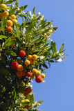 Color fruits in park Stock Image