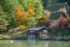 Free Color-full Autumn Tree In Hida Folk Village Takayama Japan.Tourist Feed Swan In Pond. Stock Photos - 30618583