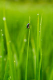 Color full insect on grass after rain Royalty Free Stock Image