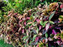 Color full plant in Garden, royalty free stock image