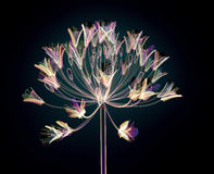 Color glass flower isolated on black , the Bell Agapanthus. Color glass flower isolated on black, the Bell Agapanthus  3d illustration Royalty Free Stock Photography