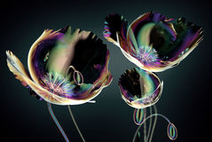 Free Color Glass Flower Isolated On Black , The Poppy Stock Images - 84280954