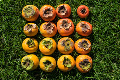 Color gradient of ripe and unripe imperfect persimmon fruit. On green grass royalty free stock photography