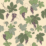 Color grapevine seamless pattern based on hand drawn sketch. Stock Photos