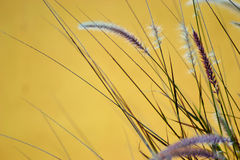 Color grass Royalty Free Stock Photography