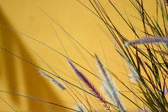 Color grass Stock Photography