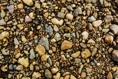 Color Gravel Texture. Pebbles and stones, wet, texture, background. Stock Photo